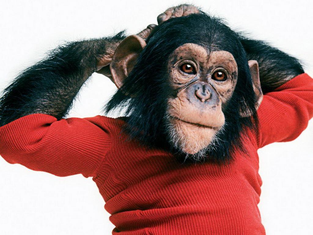 нарядная обезьянка картинки зерновка, которой семенная